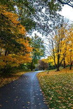 Preview iPhone wallpaper Autumn, trees, yellow leaves, footpath, park