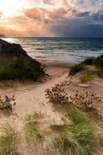 Praia, grama, mar, nuvens, pôr do sol