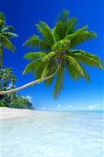 Praia, mar, sol, Veleiros, palmeiras, tropical