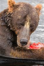 미리보기 iPhone 배경 화면 곰이 물고기, 물을 먹는다.