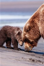Preview iPhone wallpaper Bear mom and baby