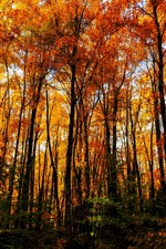 Beautiful autumn, trees, forest