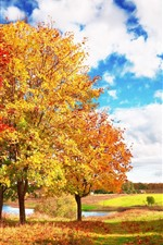 Beautiful autumn, trees, yellow leaves, white clouds