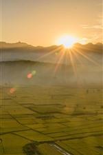 Preview iPhone wallpaper Beautiful golden fields, sun rays, fog, morning