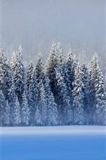 Beautiful winter, snow, trees, lake, blue, Kanas, China