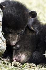 미리보기 iPhone 배경 화면 검은 곰 새끼
