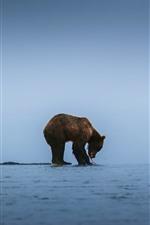 Preview iPhone wallpaper Brown bear, lake, seagulls