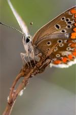 Borboleta, asas, inseto, nebuloso