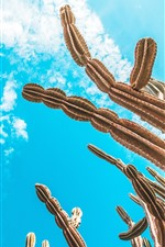 Cactus, cielo azul, nubes blancas.