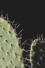 Preview iPhone wallpaper Cactus, needles, black background