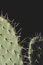 Cactus, agujas, fondo negro