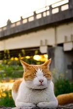 Preview iPhone wallpaper Cat sleeping, bridge