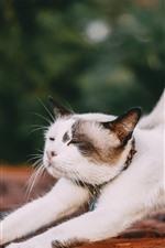 Gato estirando, patas