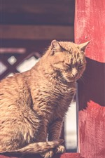 Preview iPhone wallpaper Cat, under sunshine, rest, fence