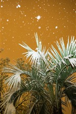 Preview iPhone wallpaper City, palm tree, leaves, snow, winter, night