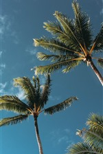 Preview iPhone wallpaper Coconut trees, sky, clouds