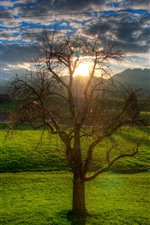 Countryside, tree, green fields, sunshine