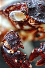 Preview iPhone wallpaper Crab macro photography, claws