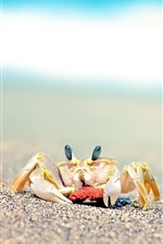 Preview iPhone wallpaper Crab, sands, beach, hazy background