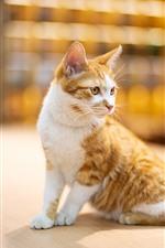 Cute kitten look back, desktop