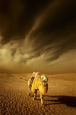 Preview iPhone wallpaper Desert, camel, clouds, dusk