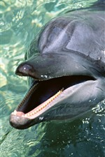 Preview iPhone wallpaper Dolphin out water, sea animal