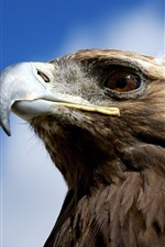 Preview iPhone wallpaper Eagle, head, beak, eye, sky, clouds