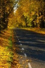 Preview iPhone wallpaper Estonia, trees, road, autumn, shadow, sunshine