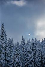 Bosque de abetos, arboles, nieve, invierno, luna.