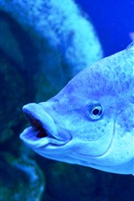 Preview iPhone wallpaper Fish, scales, under blue light