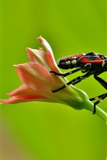 Preview iPhone wallpaper Flower, insect, bug