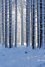 Preview iPhone wallpaper Forest, trees, thick snow, winter