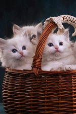 Preview iPhone wallpaper Four white kittens in a basket