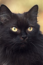 Preview iPhone wallpaper Furry black cat, yellow eyes, look