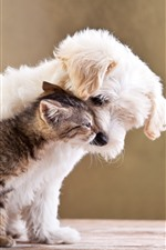 Preview iPhone wallpaper Furry puppy and kitten