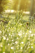 Preview iPhone wallpaper Grass, meadow, water droplets, sunshine, shine, summer