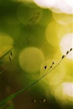 Grass, seeds, bright light circles