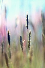 Preview iPhone wallpaper Grass, seeds, hazy background