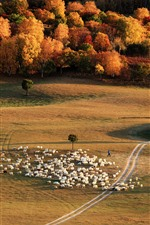 Preview iPhone wallpaper Grassland, trees, sheeps, autumn, China