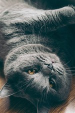 Preview iPhone wallpaper Gray cat lying on ground