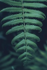 Green fern leaves close-up