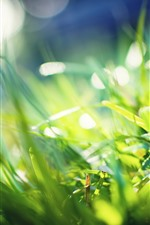 Preview iPhone wallpaper Green grass, bright, glare, sunshine, summer