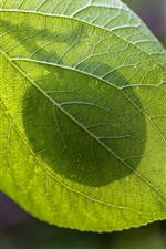 Preview iPhone wallpaper Green leaf, texture, shadow