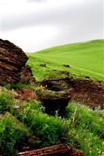 미리보기 iPhone 배경 화면 녹색 초원, 바위, 봄