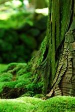 Preview iPhone wallpaper Green moss, trunk, hazy