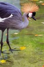 Preview iPhone wallpaper Heron, stork, beautiful bird, water