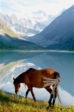 Preview iPhone wallpaper Horse, lake, mountains, nature