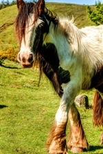 Preview iPhone wallpaper Horse walking, grass, sunshine, shadow