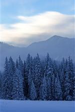 Kanas beautiful winter, trees, snow, fog, mountains, China