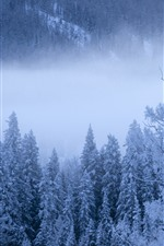 Preview iPhone wallpaper Kanas in winter, trees, snow, mist, China